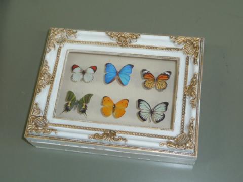 蝶の標本箱 完成