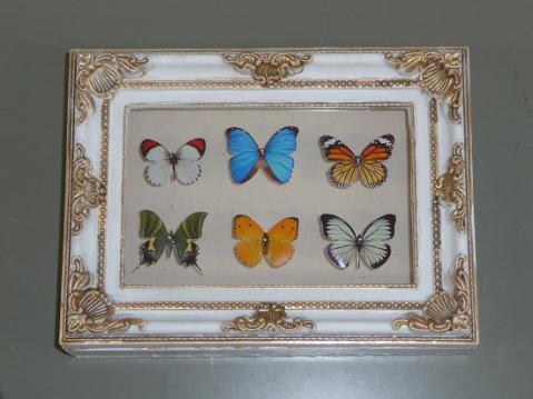 蝶の標本箱1