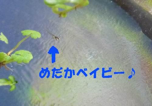 P1070026.jpg