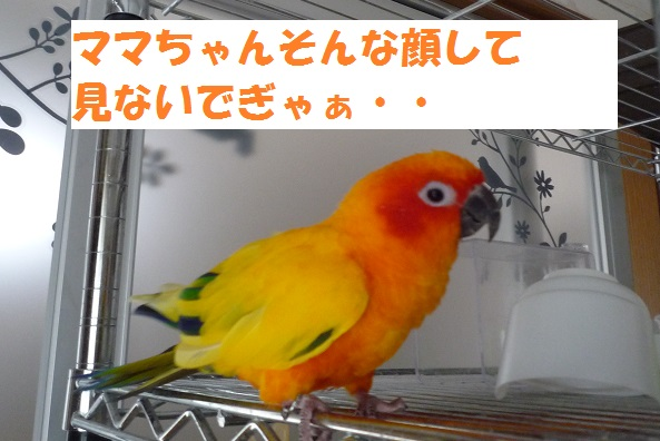 P1070597.jpg