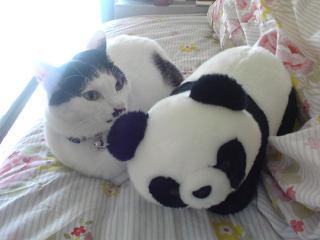 パンダとここちゃん