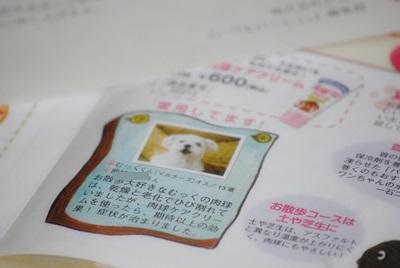 DSC_0091a.jpg