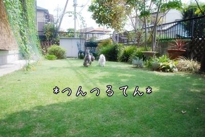 DSC_0472a_20130831224204e70.jpg