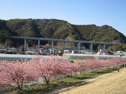 桜並木と新東名
