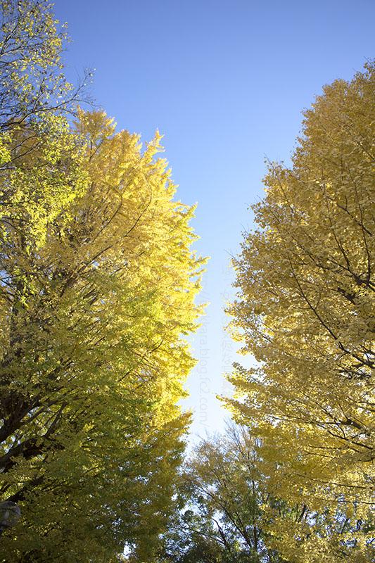 新宿の秋②