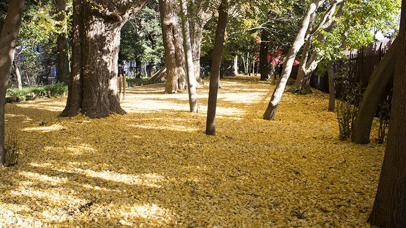 新宿の秋③