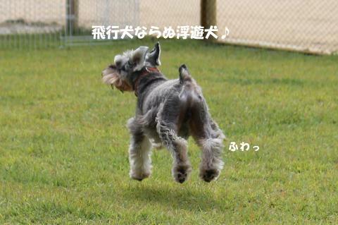 りくの浮遊犬