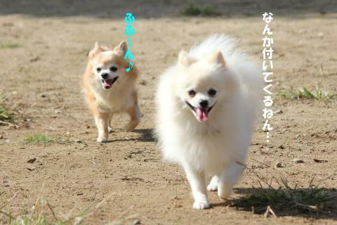 IMG_3799_convert_20101010200129.jpg