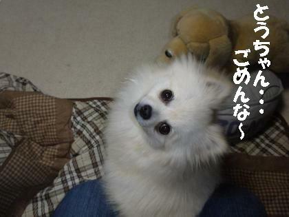 P4140029_convert_20100415192238.jpg