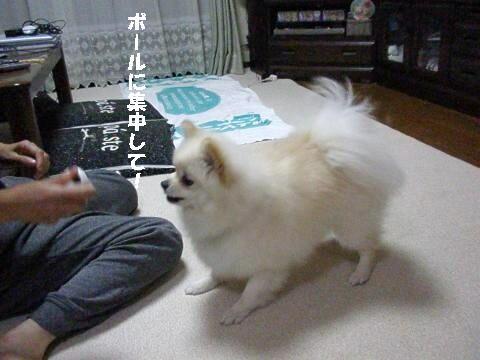 P6140010_convert_20100615223219.jpg
