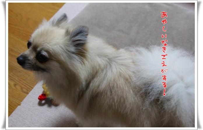 024_20130628203859.jpg