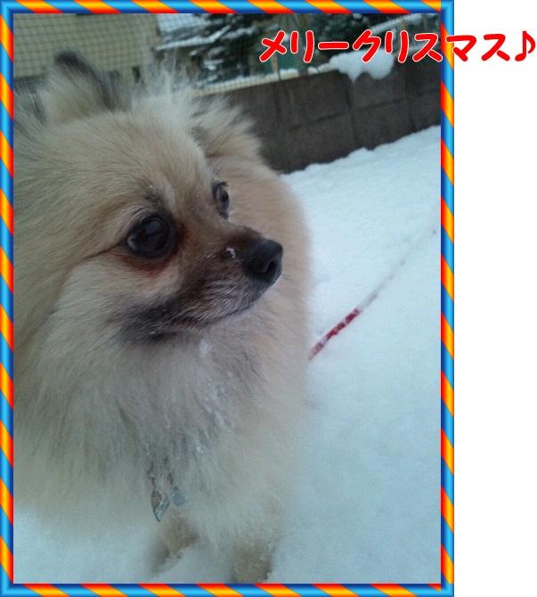 2012-12-24-16-49-02_photo.jpg