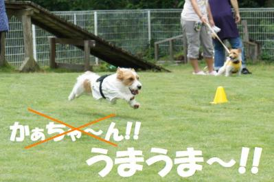 30_縺ス繧薙◆縺上s_convert_20110702144504