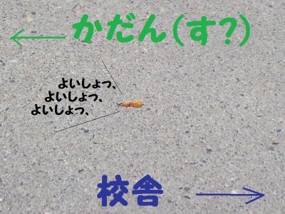 CA3C0057_convert_20110516115439.jpg