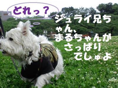 CA3C0118_convert_20110601134529.jpg