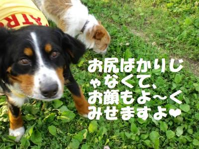 CA3C0123_convert_20110606180034.jpg