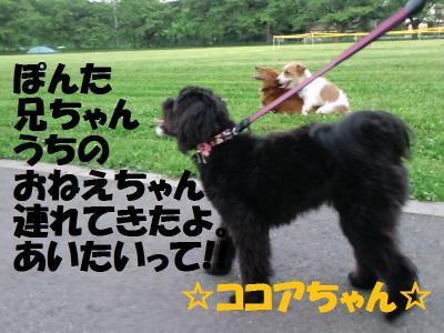 CA3C0207_convert_20110701182511.jpg