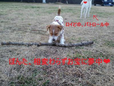 CA3C0884_convert_20110124173101.jpg