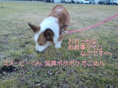 CA3C0903_convert_20110126131836.jpg