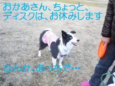 DSCN0158_convert_20110127150940.jpg