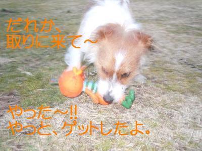 DSCN0185_convert_20110127145843.jpg