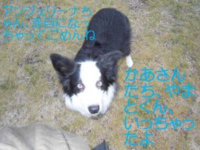 DSCN0203_convert_20110131124617.jpg