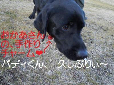 DSCN0208_convert_20110131125332.jpg