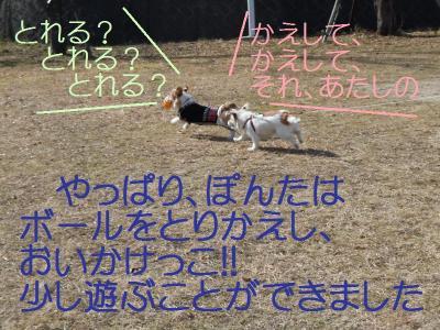 DSCN0231_convert_20110201133428.jpg