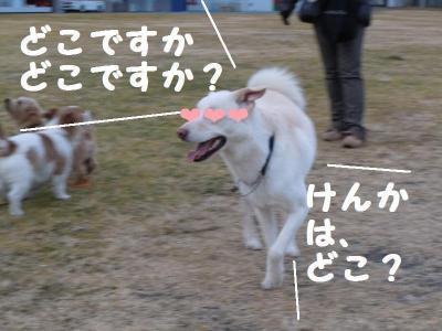 DSCN0246_convert_20110203122714.jpg
