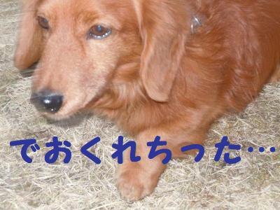 DSCN0248_convert_20110203123012.jpg