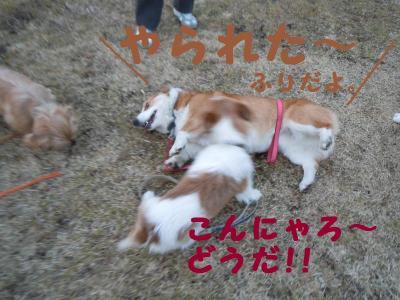 DSCN0258_convert_20110203121245.jpg