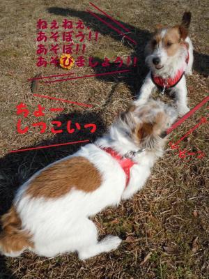 DSCN0275_convert_20110210130933.jpg
