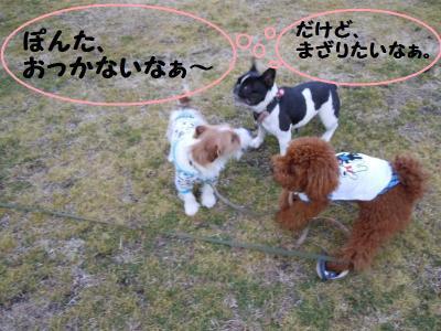 DSCN0359_convert_20110218153311.jpg