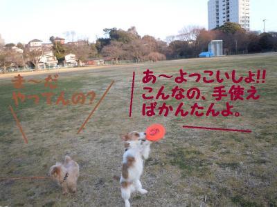 DSCN0414_convert_20110227111833.jpg