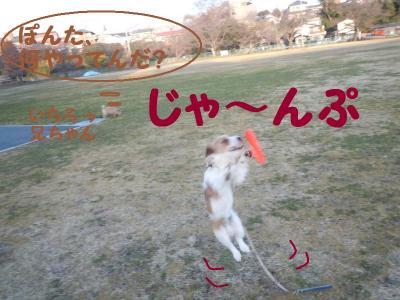 DSCN0415_convert_20110227111921.jpg