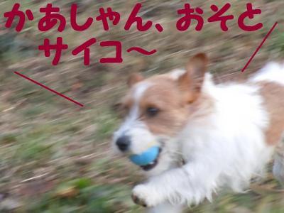 DSCN0666_convert_20110303115208.jpg