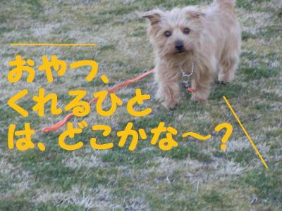 DSCN0703_convert_20110304182313.jpg