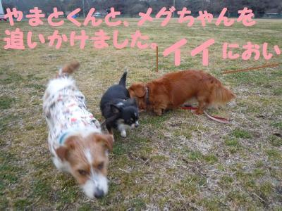 DSCN0719_convert_20110308141606.jpg