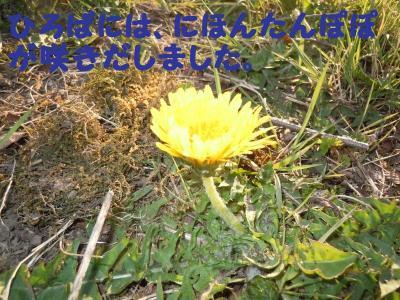 DSCN0879_convert_20110406172436.jpg
