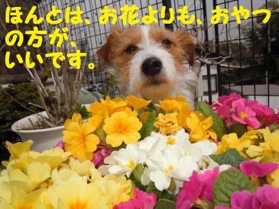 DSCN0895_convert_20110408130541.jpg