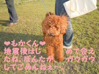 DSCN0910_convert_20110414135940.jpg