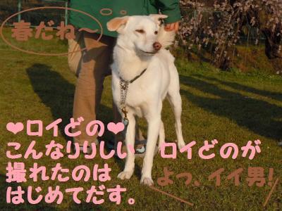 DSCN0911_convert_20110414140032.jpg