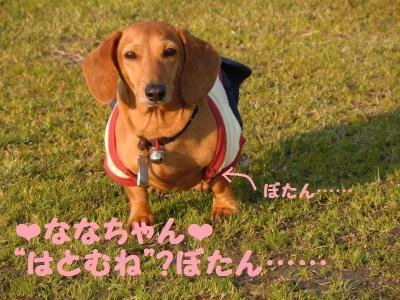 DSCN0912_convert_20110413182038.jpg