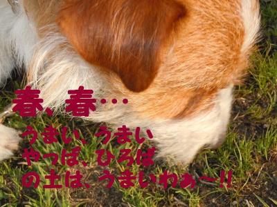 DSCN0914_convert_20110413182132.jpg