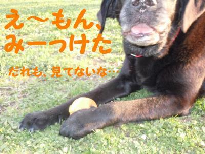 DSCN0924_convert_20110416175208.jpg