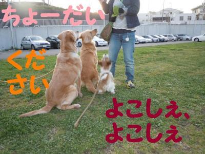 DSCN0936_convert_20110416175424.jpg