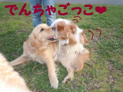 DSCN0942_convert_20110416175506.jpg