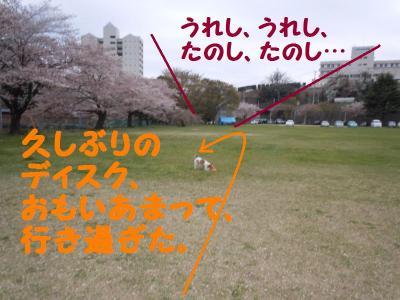 DSCN0946_convert_20110419171746.jpg