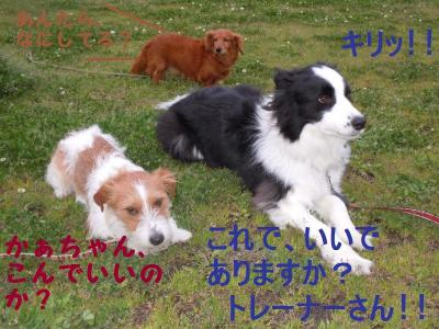 DSCN1013_convert_20110428111816.jpg