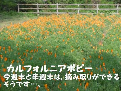 DSCN1059_convert_20110507130607.jpg
